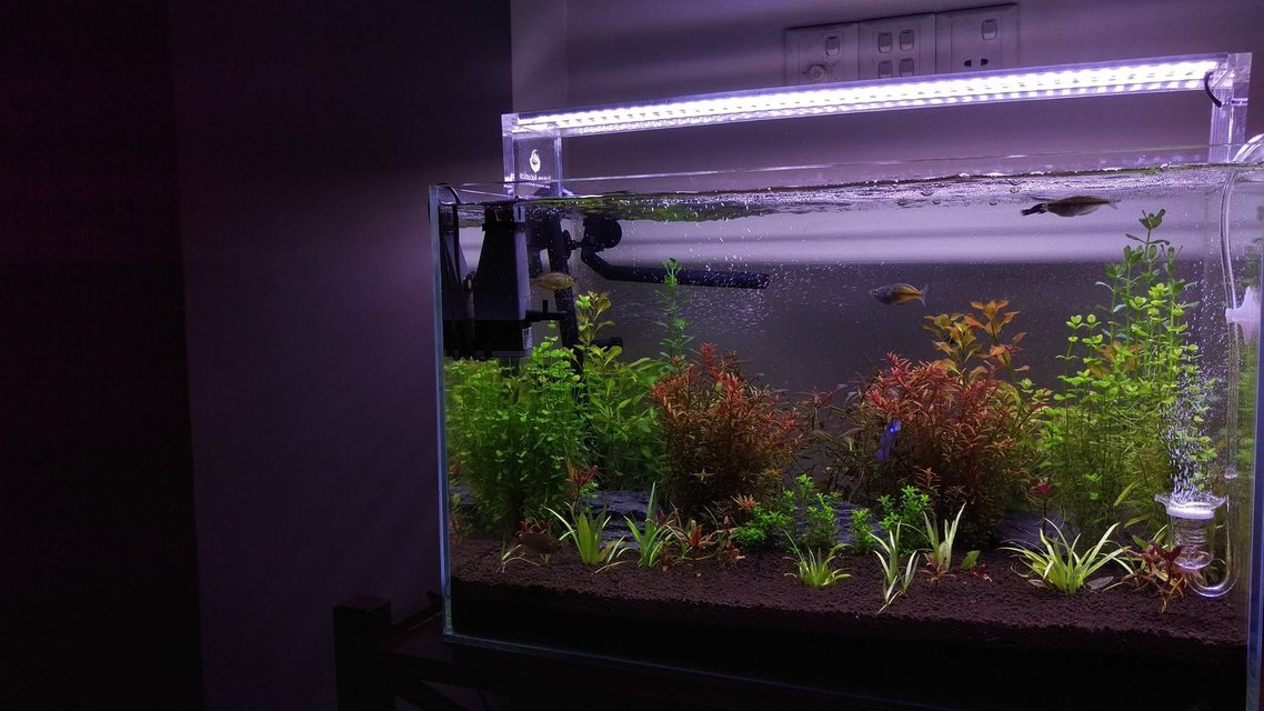 Rated #22: 26 Gallons Planted Tank - A month old planted tank.