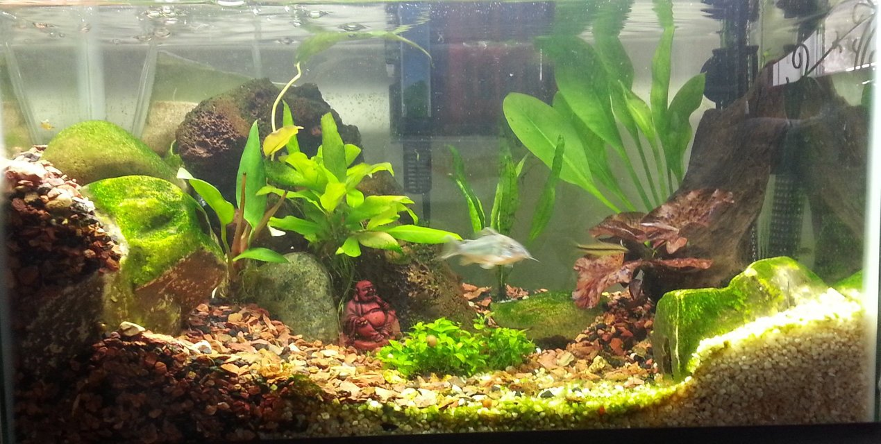 Rated #51: 15 Gallons Planted Tank - 10 gallon standard