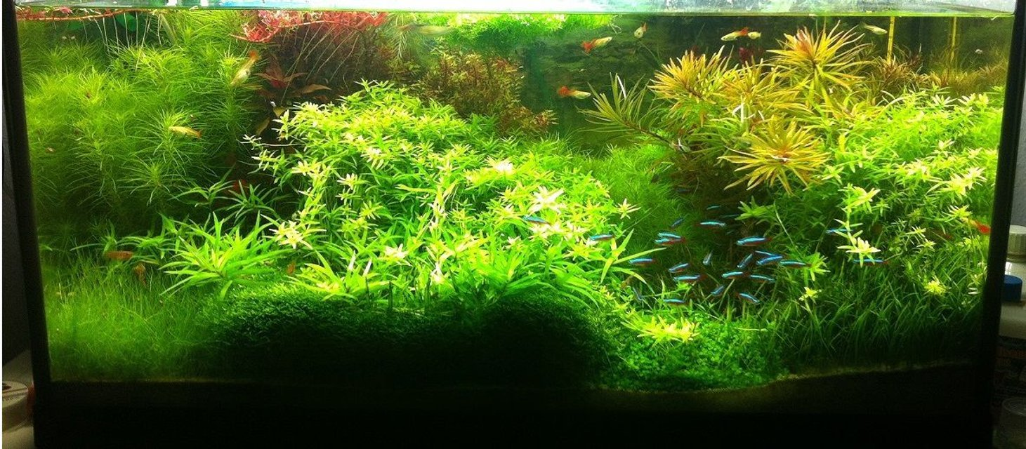 Rated #3: Planted Tank - -