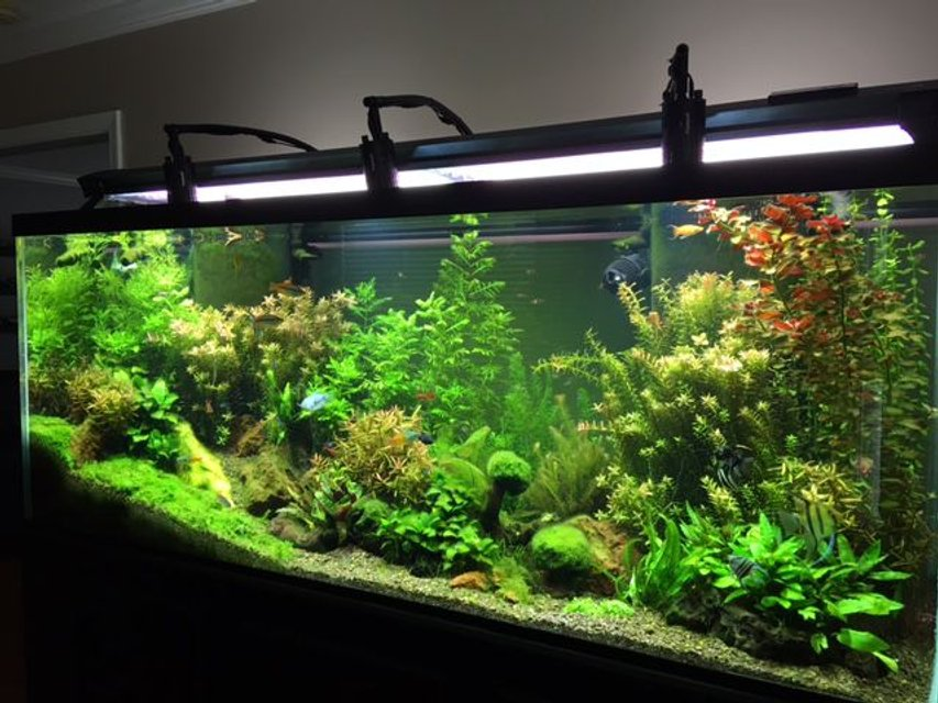 Rated #2: 225 Gallons Planted Tank - 225 standard 6 FT Freshwater Planted Aquarium.