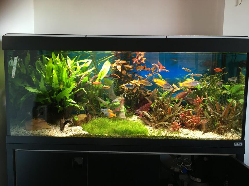 Rated #6: 55 Gallons Planted Tank - Planted tank