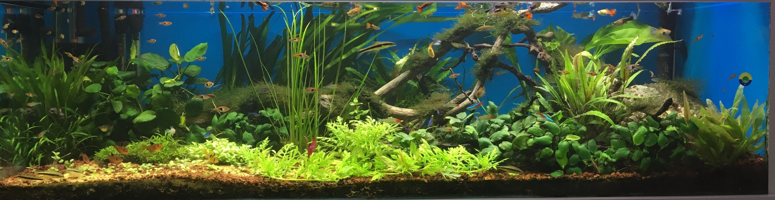 Rated #11: 100 Gallons Planted Tank - June 2017
