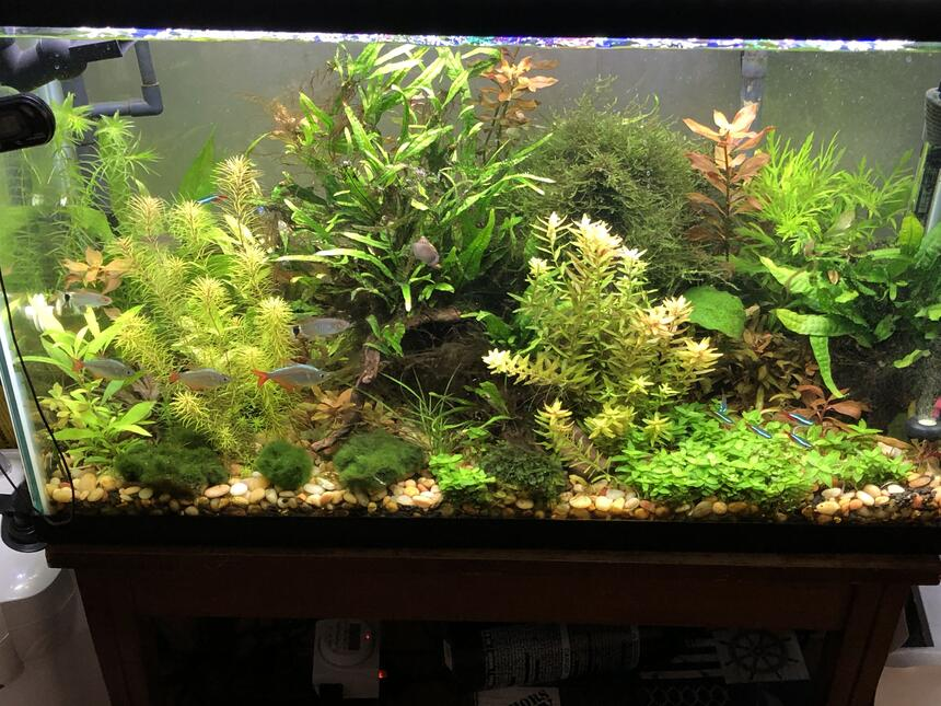 Rated #1: 29 Gallons Planted Tank - piece of nature