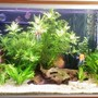 98 gallons planted tank (mostly live plants and fish) - Sorry about the curtain reflection....