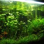 90 gallons planted tank (mostly live plants and fish) - 90G - 3'x2'x2' pH - 6.8 | average water temperature - 27C 6500k Compact fluoroscent lighting (260W) DIY canister filter - 800l/h DIY CO2 - 2BPS PMDD fertilization.