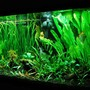 75 gallons planted tank (mostly live plants and fish) - 75 gallon planted tank