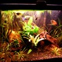 20 gallons planted tank (mostly live plants and fish) - a better representation...