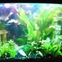 29 gallons planted tank (mostly live plants and fish) - This is my first tank. Sorry for the pic quality. I can't seem to take a decent pic to save my life. LOL