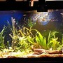 55 gallons planted tank (mostly live plants and fish) - Planted with driftwood and angelfish