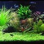 125 gallons planted tank (mostly live plants and fish) - Malawi Redux