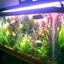 75 gallons planted tank (mostly live plants and fish) - another side view...
