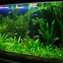30 gallons planted tank (mostly live plants and fish) - I keep fresh water fish long time ago but when i saw sum planted tank photos on net when I surfing sum information that time I decide to kept the planted tank. I am a 3D graphic Artist