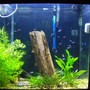 55 gallons planted tank (mostly live plants and fish) - 40 gallon tall amazon