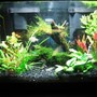 10 gallons planted tank (mostly live plants and fish) - fishtank