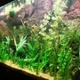 55 gallons planted tank (mostly live plants and fish) - 240 litre juwel tank with pressurized Co2.