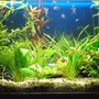 60 gallons planted tank (mostly live plants and fish) - Photo 1