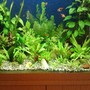 55 gallons planted tank (mostly live plants and fish) - all growing well :)