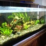 75 gallons planted tank (mostly live plants and fish) - after the suggestions and all.. my plants grew..