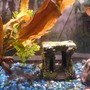 29 gallons planted tank (mostly live plants and fish) - Red plants, blue gravel; the 3-D aquatic