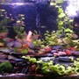 150 gallons planted tank (mostly live plants and fish) - A new picture from 9-16-2010. Click for a clearer image for some reason the thumbnail is super blurry...