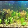 75 gallons planted tank (mostly live plants and fish) - 75 gallon planted aquarium