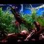 45 gallons planted tank (mostly live plants and fish) - 45 gallon freshwater tank... My first big tank :-)