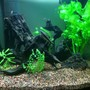 30 gallons planted tank (mostly live plants and fish) - 30 Gallon Freshwater Planted