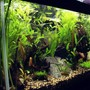 15 gallons planted tank (mostly live plants and fish) - side viwe