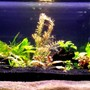 15 gallons planted tank (mostly live plants and fish) - 15 gallon planted tank with a variety of fish