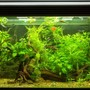 11 gallons planted tank (mostly live plants and fish) - All plants live Co2 used