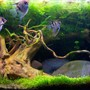 90 gallons planted tank (mostly live plants and fish) - planted 200ltr