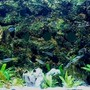 125 gallons planted tank (mostly live plants and fish) - 125 gallon DIY Background Honoring Lake Tanganyika