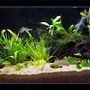 planted tank (mostly live plants and fish) - My work tank. Has some tetras and low light plants.