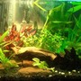 20 gallons planted tank (mostly live plants and fish) - Various Fish and plants. Fish: Livebarers to tetras to pleco to coridoras & loach. plants: anubas, amizons, ferns and moss. creepers and grass are baned here.. ;(