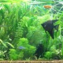 15 gallons planted tank (mostly live plants and fish) - 20 Gal Long Planted Tank
