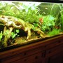 55 gallons planted tank (mostly live plants and fish) - planted 55 gal