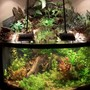 92 gallons planted tank (mostly live plants and fish) - Tropical Rain Forest