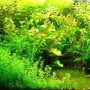 100 gallons planted tank (mostly live plants and fish) - My aquarium