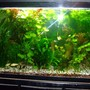 29 gallons planted tank (mostly live plants and fish) - 29 Gallon.. 55w CFLs.. DIY CO2.. Flourite