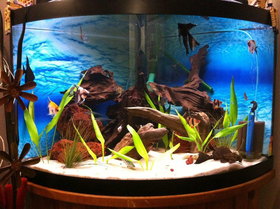 Gettinstarted 39 s planted tanks photo id 38998 full for Koi fish tank setup