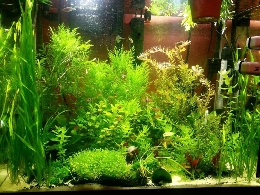 Sype2470's Planted Tanks Photo (ID 42492) - Full Version ...