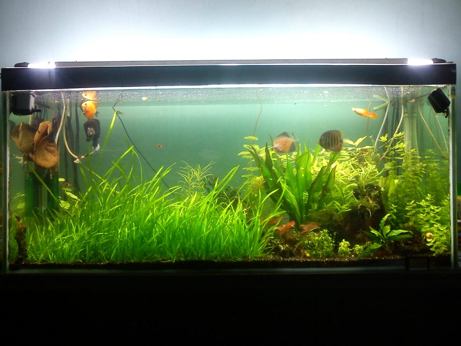 Ice c r e a m 39 s planted tanks photo id 42981 full for Fish tank ice method