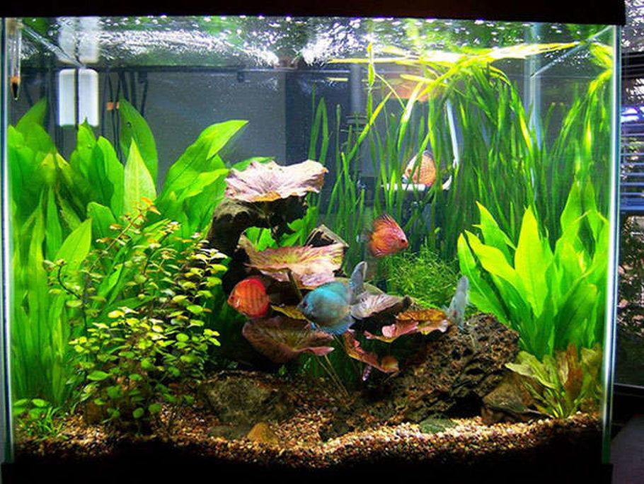 Jcarlilesiu 39 s planted tanks photo id 5426 full version for Column fish tank